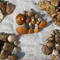 Ціна «грибний рулетки» у Полтаві - 15 гривень за купку