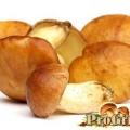 Делікатесний і неймовірно корисний гриб маслюк
