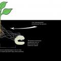 Гриб-паразит допомагає рослинам ловити і з'їдати комах
