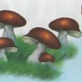 Грибний день: Святий Тит останній гриб ростить