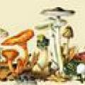 Грибні рецепти з форуму грибників