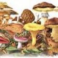 Грибні жителі і хто любить ласувати грибами