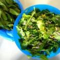 Як робити салати з дикорослих рослин