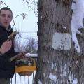 Як ми в засніженому нижньому гриби збирали