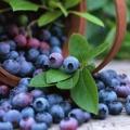 Мінприроди посилило покарання за заподіяння шкоди об'єктам рослинного світу, занесених до Червоної книги