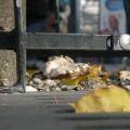 На проспекті Гедімінаса у Вільнюсі виросли гриби