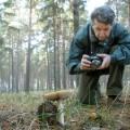 Новгородські вчені знайшли кілька рідкісних видів грибів, невідомих раніше