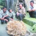 Величезний гриб знайшов китайський селянин