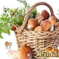 Користь грибів: лікарські та інші корисні властивості «лісового м'яса»