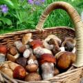Правила збору ягід та грибів у лісах сибіру розроблять в 2015 році