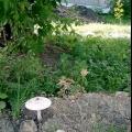 Продукція пензенських грибоводов викликала великий попит у москвичів