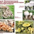 Радіація і гриби