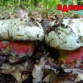 Сатанинський гриб