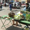 У Ярославлі з'явилися перші гриби
