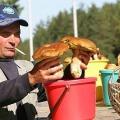 У ярославської області відмічається небувалий урожай білих грибів