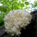 В москве виявили два рідкісних виду рослин і грибів