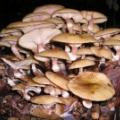 У Татарстані в цьому році в лісах з'явилися всі види грибів