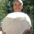 Житель Нижнєкамська приніс в НТР гриб вагою 4 кілограми