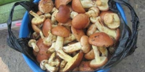 Амурчан попереджають про гриби від нелегальних торговців