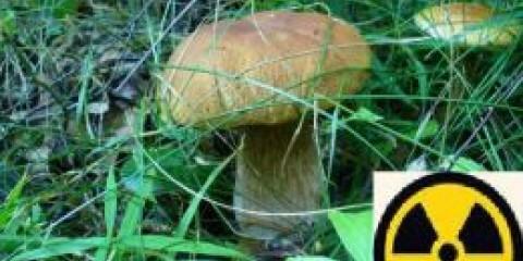Челябінці можуть безкоштовно перевірити на шкідливість лісові гриби та ягоди