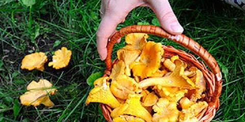 Десятка грибних місць самарської області