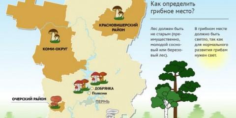 Де в пермському краї є грибні місця?