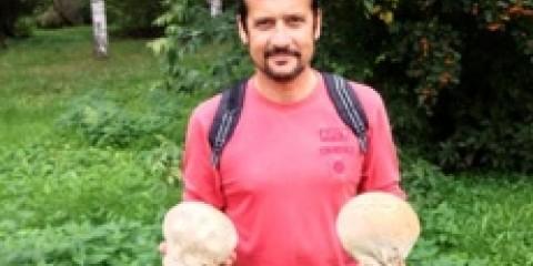 Гігантські гриби з Європи оселилися в єкатеринбурзькому дендропарку