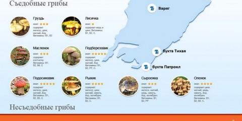 Грибний сезон у Владивостоці триватиме до кінця жовтня
