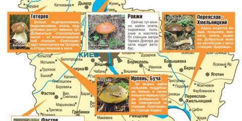 Грибні місця України