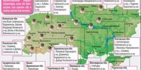 Іркутські вчені виявили чудо-гриб всередині берези