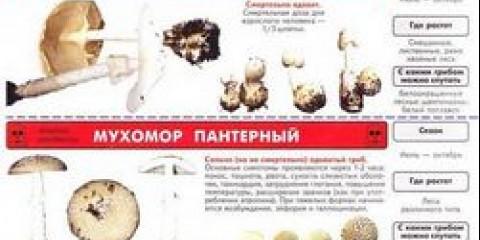 Як відрізнити їстівний гриб?