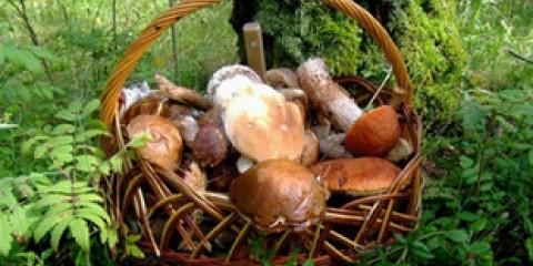 Як правильно: сходити по гриби або сходити за грибами?