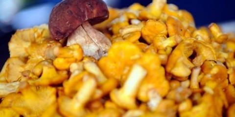 Латвійські експерти: урожай грибів буде найбагатшим на початку осені