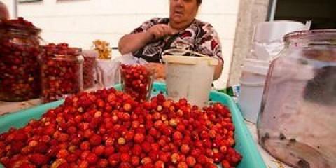 Литва: природоохоронці: збирати ягоди та гриби треба так, щоб не нашкодити лісі