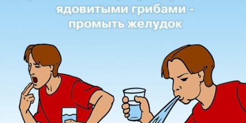 Мнс України розповів, що не отруїться грибами