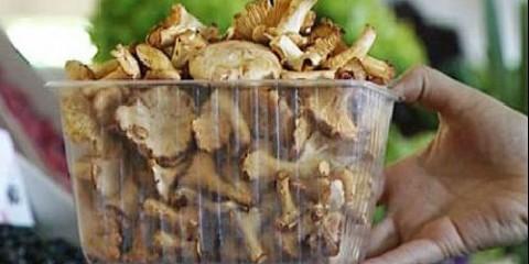 Багато їстівні гриби стали отруйними
