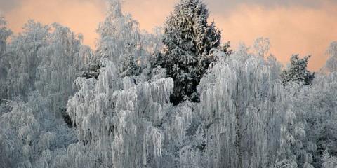 Народні прикмети: якщо січні холодний, липень буде сухий і спекотний - не чекай грибів до осені