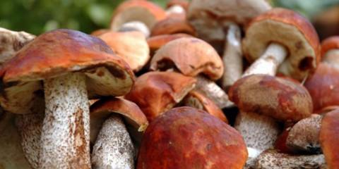 Нічний чемпіонат грибників пройде в латвии