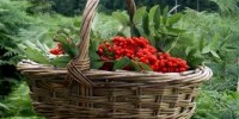 Про ягодах