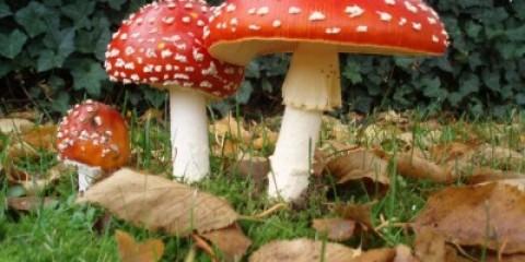Отруєння грибами обійдеться кримчанину в 2 тисячі гривень на день