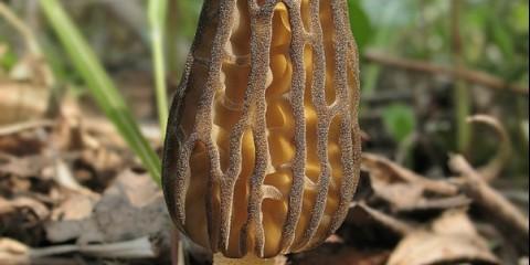 Перші гриби Омутнинск