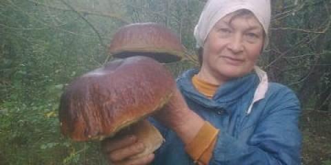 Під мінському ростуть гриби-велетні