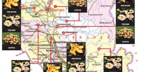 Самі грибні місця Кузбасу