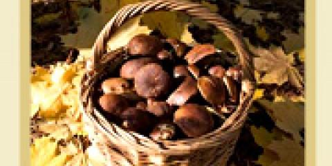 Їстівні та отруйні гриби середньої смуги росії