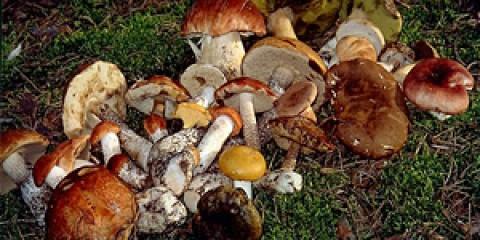 Соління грибів, зберігання солоних грибів