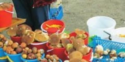 Фахівці Росспоживнагляду перевірили гриби та ягоди на радіоактивність