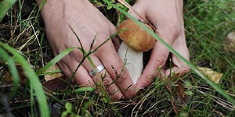 Серед волгоградцев виберуть грибних мисливців