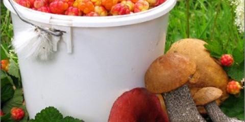 Україна, херсон: за ягоди, гриби і пікніки в лісі доведеться платити