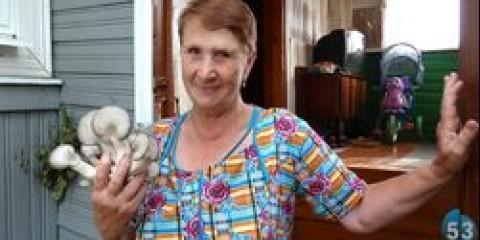 У Батецкій районі знайшли рідкісний вид грибів ентолома блоксама
