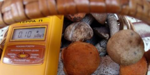 У грибах і ягодах з калузької області перевищено вміст цезію-137